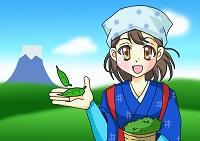 茶摘の女の子