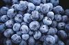 ブルーベリーの味の特徴!美味しい品種の味を調査!
