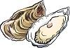 牡蠣の旬の時期はいつ?生牡蠣は食中毒に気をつけて!