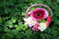 クローバーと花
