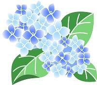 酸性性の土によって咲いた青色のあじさい