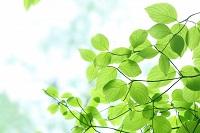 観葉植物を育てるのに必要な光