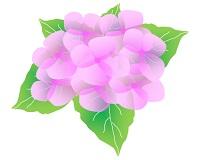 アルカリ性の土によって咲いたピンク色のあじさい