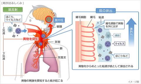 咳の出る仕組み