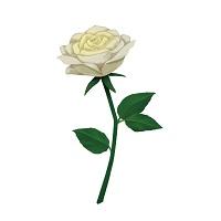 父の日 白いバラ