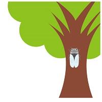 セミが脱皮をするのは木の低い所