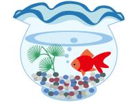 水道水のカルキ抜き、金魚用